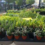 Farmer's Market: Downtown Stroudsburg